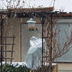 Winter in der KGA AM Feldweg